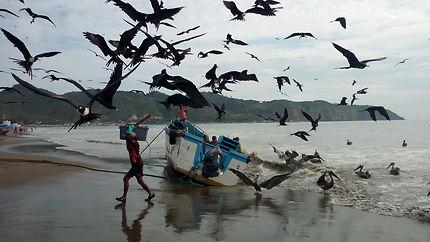 Gaviotas en la Playa de Puerto López