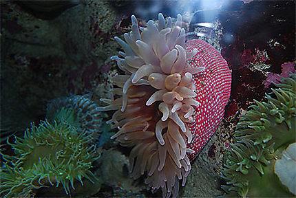 Les merveilles de l'océan