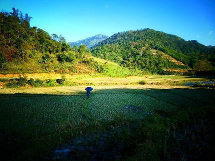 Perdu au milieu des rizières arides