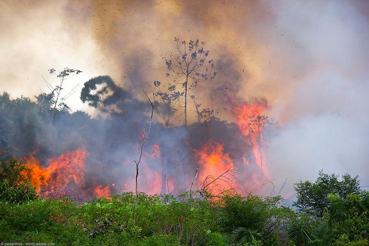 Feux de forêt - Le Brésil et l'Amazonie ne sont pas les seuls concernés