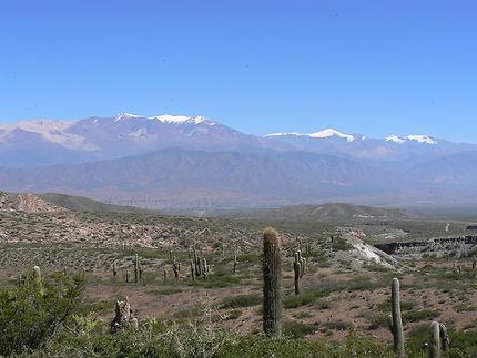 Cactus sur le chemin de Cachi