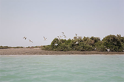 Hara merine forest - Persian golf