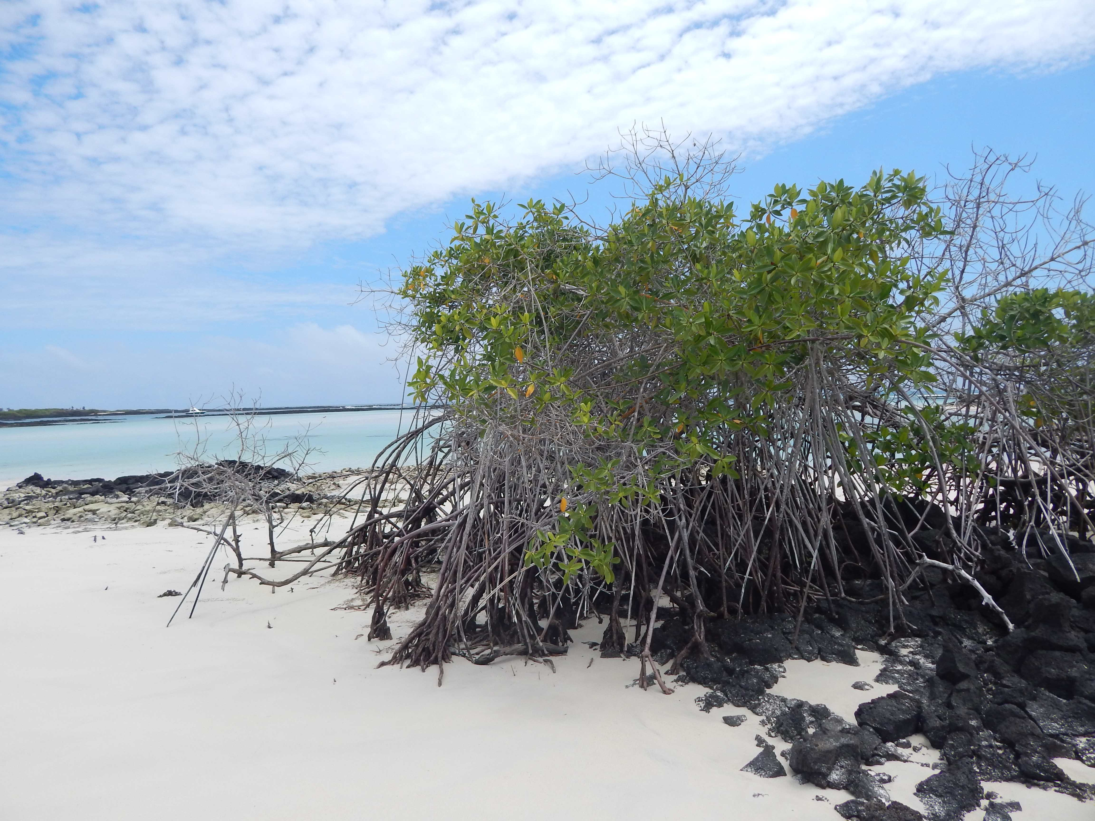 Isla Santa Fé - Îles Galápagos
