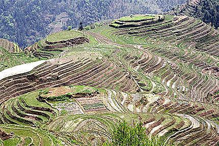 Promenade dans les rizières de Longji