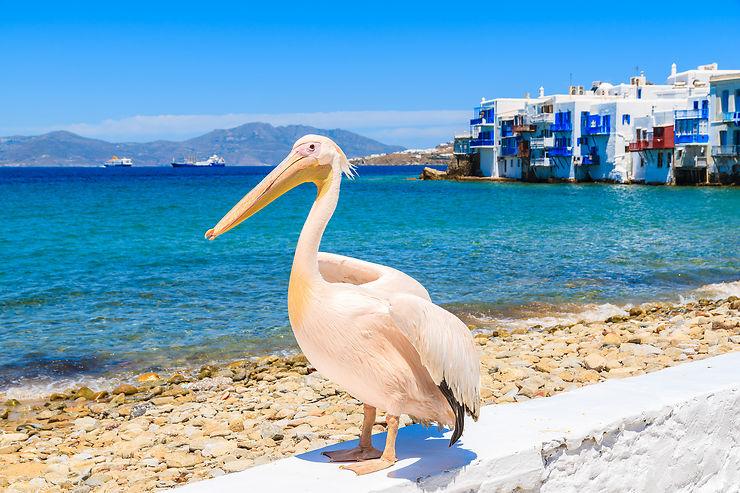 Mykonos : l'île de la jet-set et des pélicans