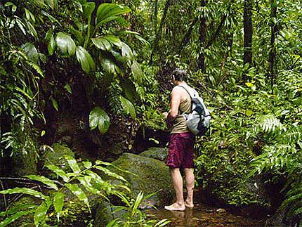 Ballade en forêt tropicale guadeloupe