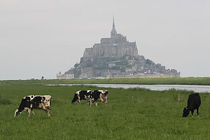 Plancher des vaches