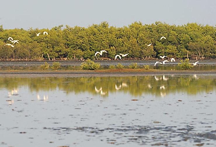 Montecristi, charme créole et réserve ornithologique