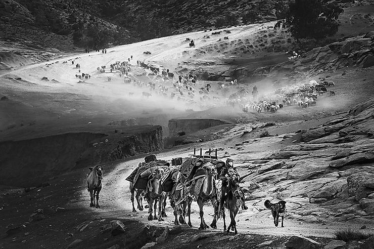 Kazakhs guidant leur troupeau pour la transhumance, Préfecture de l'Altaï, Xinjiang, Chine