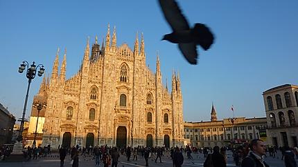 Le Duomo et l'oiseau