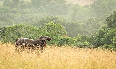 Parc national de Conkouati-Douli