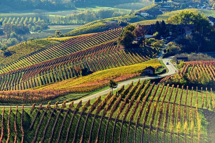 Les routes des vins dans le monde