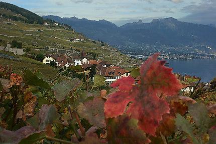 Vue du Lavaux en Suisse