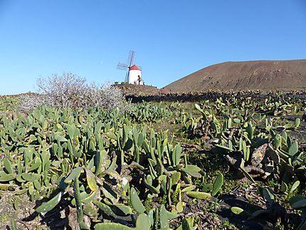 Le moulin du village de cactus