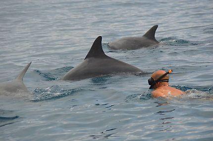Nage avec un banc de dauphins