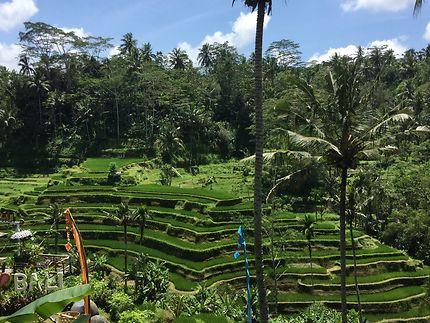 Rizières en escalier à Bali