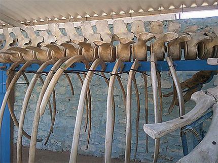 Squelette d'une baleine échouée à Kerkennah
