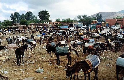 Parking des ânes