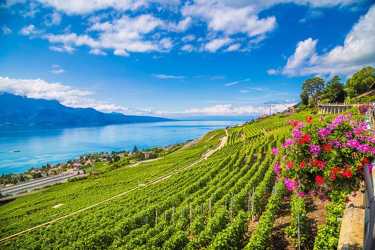 Les Vins De Suisse Entre Lacs Et Montagnes