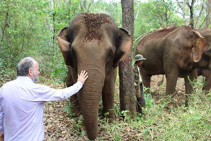 Voyage avec les éléphants à Mondulkiri