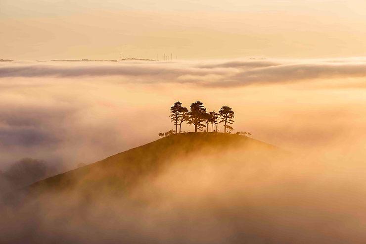 Matinée brumeuse, Colmer's Hill, Dorset