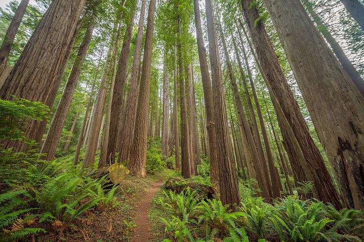 Endor : parc de Redwood, Californie