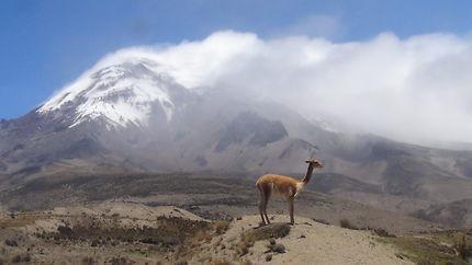 Volcan Tunguraha