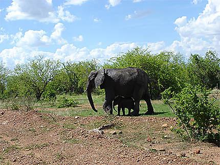 Maman éléphant et son petit