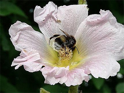 Du pollen plein les pattes
