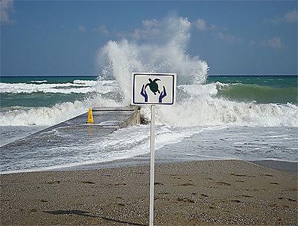 Réthymnon : touristes et tortues se partagent la plage !