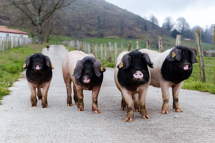 Vallée des Aldudes : tout est bon, dans le cochon basque