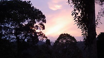 Parc national Gunung leuser