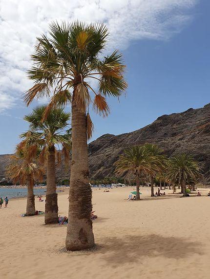 Palmiers sur la plage de Las Teresitas à Ténérife,