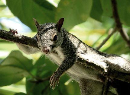 L'écureuil de Playacar