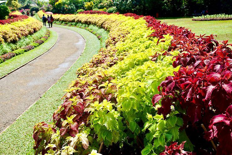 Jardin botanique de Peradeniya, Sri Lanka