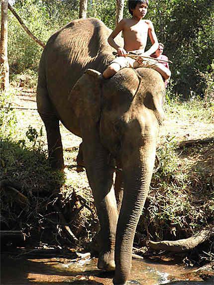 Rivière au fond d'un ravin, éléphant et son jeune cornac