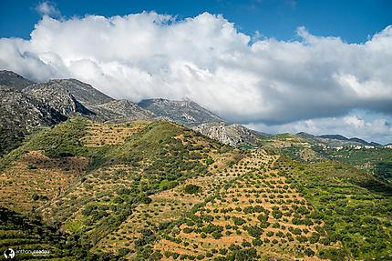 Plantations d'oliviers près de Polyrrinia