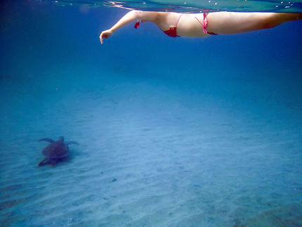 Nage avec les tortues