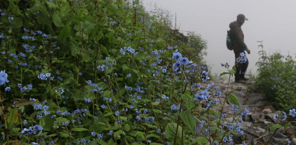 Trek dans la vallée des fleurs et loger dans un Gurdwara en Inde