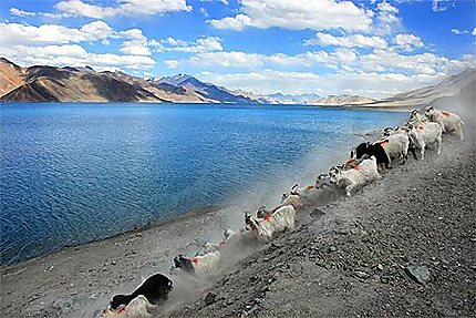 Le Pangong Tso, lac sacré au Ladakh