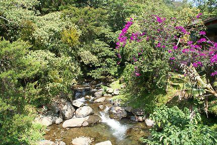 Fraîcheur à Boquete, Panama