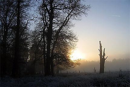 Brouillard dans l'Hertogenwald