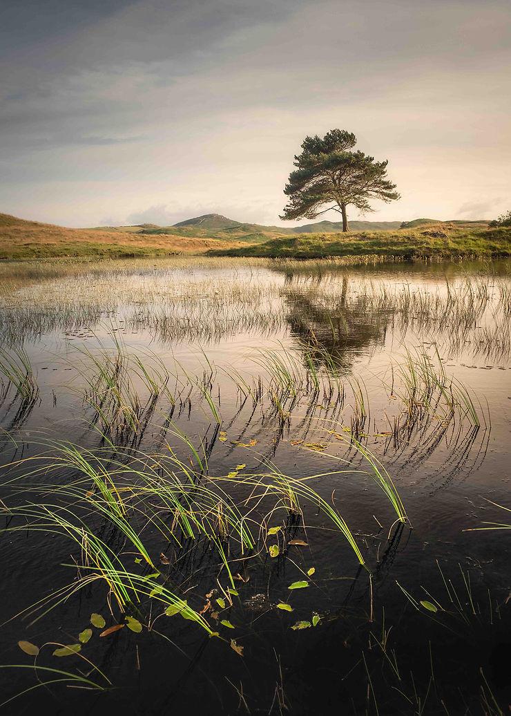 Végétation lacustre, Cumbria