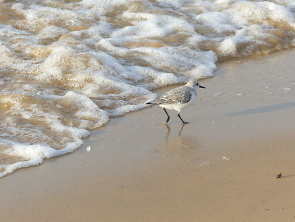 La vague et l'oiseau, banc d'Arguin