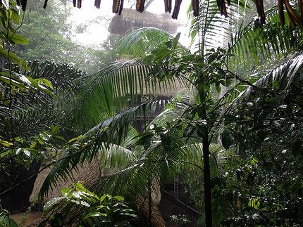 Par temps de pluie, la canopée à Kourou