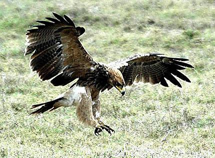 L'aigle sert... la photo