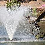 Fontaine à Monterey