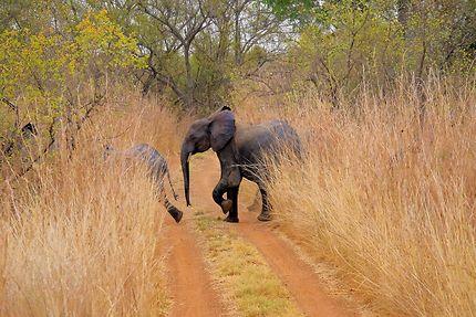 La patrouille des éléphants, parc de la Pendjari
