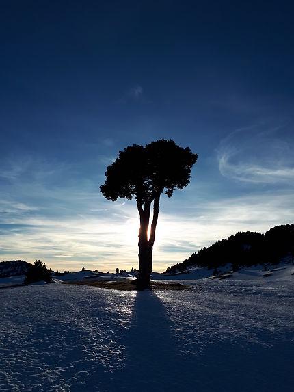 Arbre solitaire sur la plaine de le Queyrie