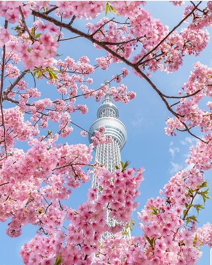 Le Tokyo Sky Tree vu du parc Sumida